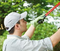 Servicios de jardiner a para edificios y empresas grup ld for Auxiliar jardineria